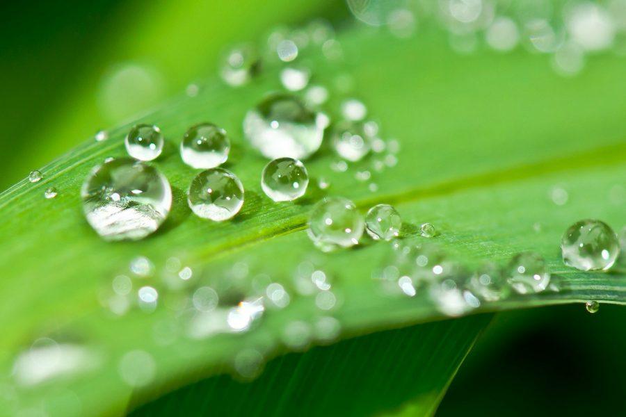 Lass dich vom Mai-Wasser liebevoll verwöhnen!